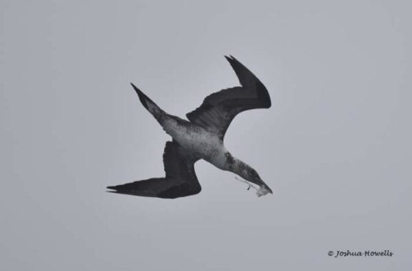 coast-boat-trips-birds-cornwall-diving-2