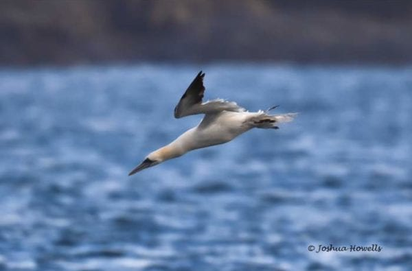 coast-boat-trips-birds-cornwall-diving