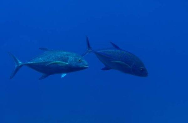 coast-boat-trips-bluefin-tuna-ocean