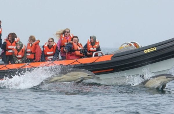 People seeing Dolphins on a Coast Boat Trip in Cornwall