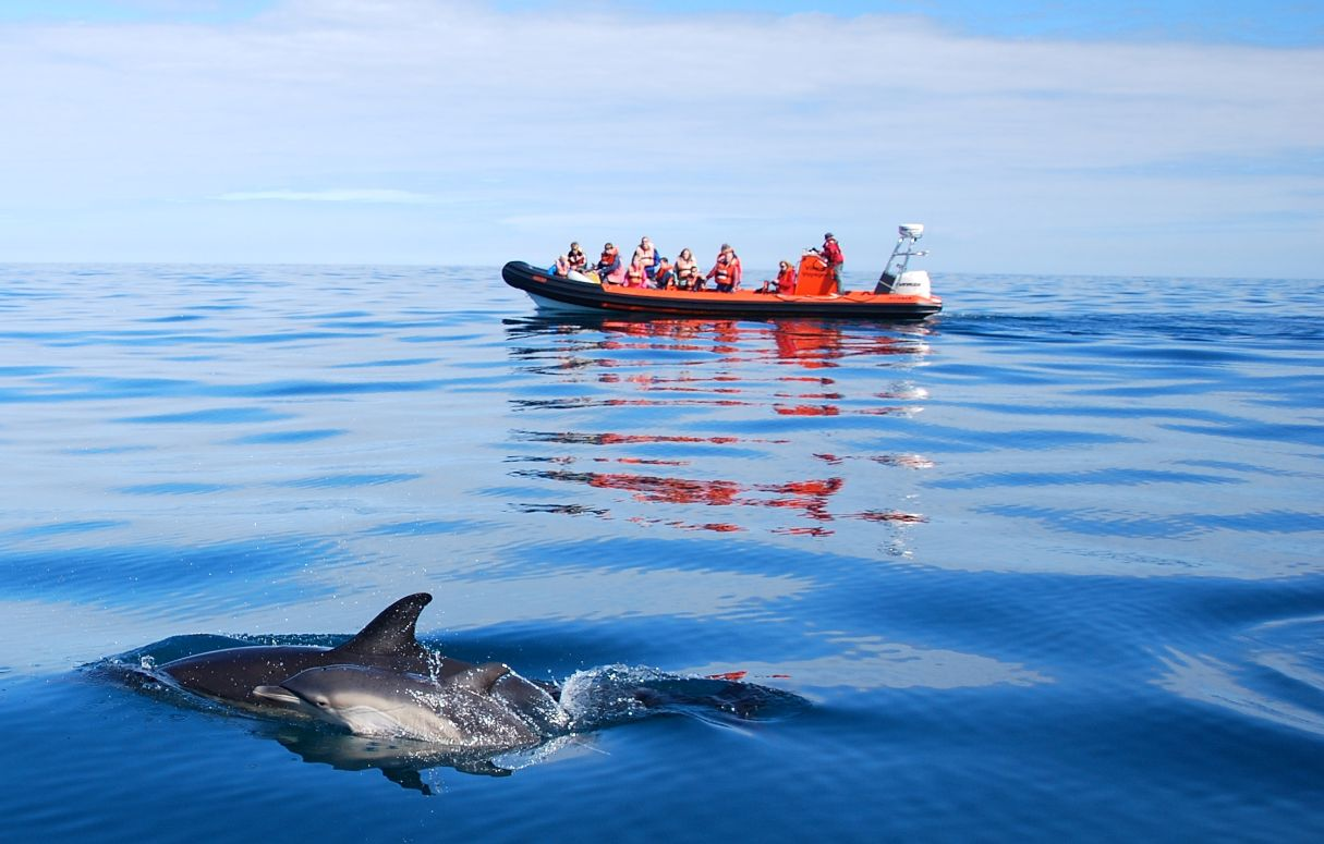 Coast Boat Trip tour seeing dolphins