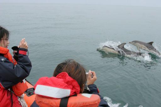 coast-boat-trips-dolphin (1)