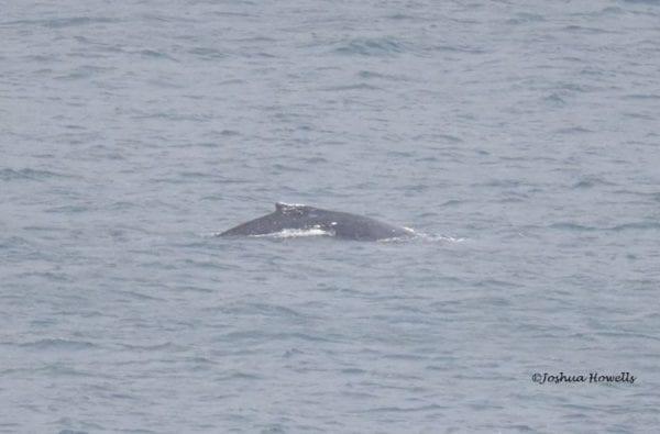 coast-boat-trips-whale (1)