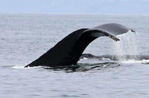coast-boat-trips-whale (2)